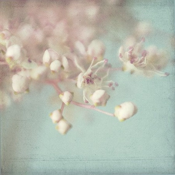 Flower Photography, Macro Photography,  Filipendula,  Floral  Art Print,  Pink and Turquoise Wall Decor, Shabby Chic Home Decor