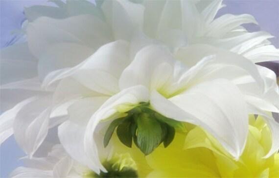 White Dahlia Card, Flower Photo card, Fine Art Note Card, Floral Print