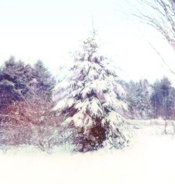 Winter Wall Decor, Snow Photo, Tree Photo, Poloaroid Photograph, Fir Tree, New England Snow Holiday Decor