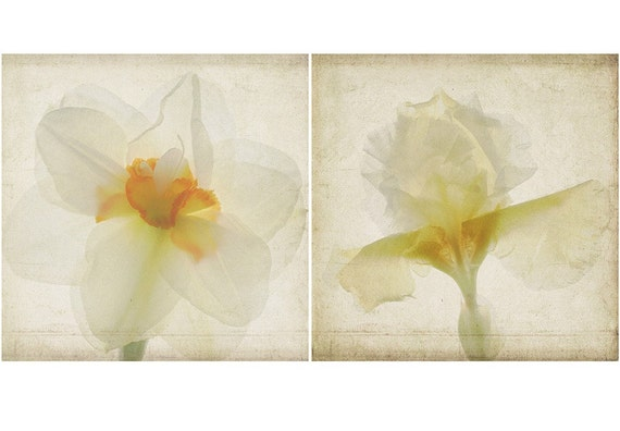 Botanical Art Print Set, Scanned Flowers, White Daffodil,  Iris Still Life,  Shabby Chic Wall Decor