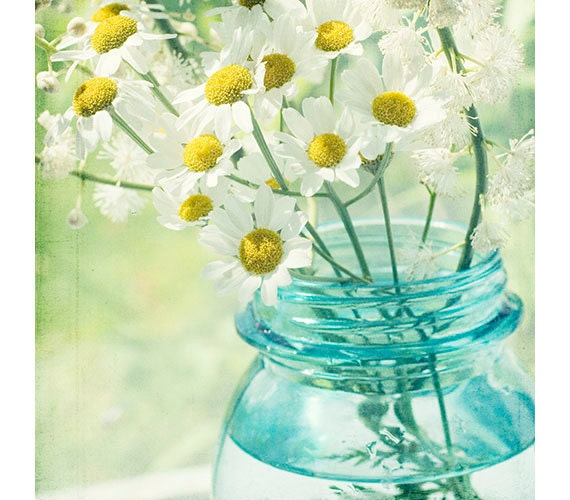 White Daisy Still Life Photograph Turquoise Wall by JudyStalus