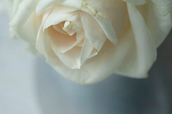 White Rose Photograph, Flower Photography, Romantic Floral Art Print, Shabby Chic Home, Cottage Chic