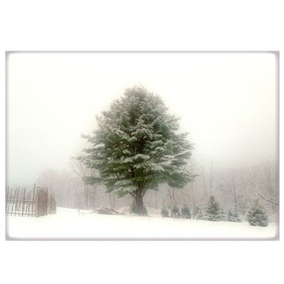 Winter Landscape Photograph,  Snow Pine Tree, New England Holiday Decor, Rural Snow Scene Wall Decor
