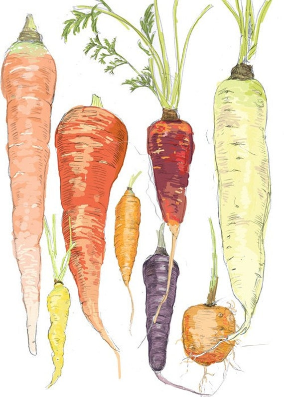 Illustrated Carrots -  Boxed Set of 8 greeting cards
