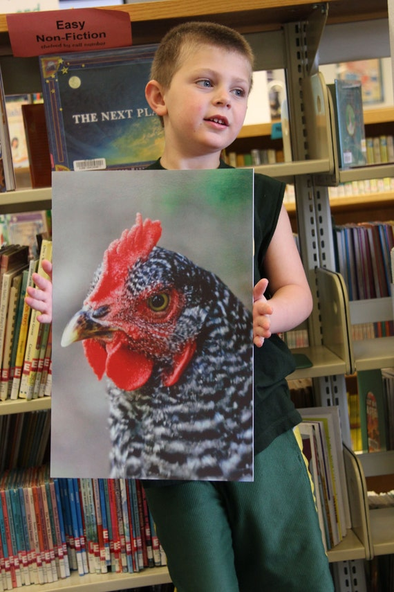 Free Range Hen Photograph Wall Hanging, Home Decor