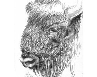 Original Bison Drawing