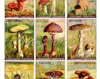 Digital Vintage Ephemera Collage Sheet Mushrooms and Fungus Images  ATC sized 2.5 x 3.5 inches ZNE perfect for Fairy Backgrounds Butterflies