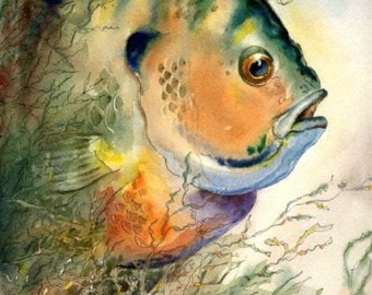 Bluegill fish Watercolor Painting 8X10 or 11X14 Best Cottage or Lake House Decor Art Print by fishing artist Barry Singer