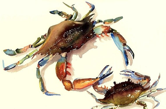 BIG brother of the Bully Blue Crab 11X14 watercolor print by Barry Singer