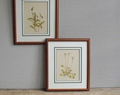 Vintage Botanical Print  Matted and Framed : Venus Fly Trap by Mary Walcott