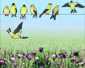 Goldfinches and Thistle, open edition digital print 8X10