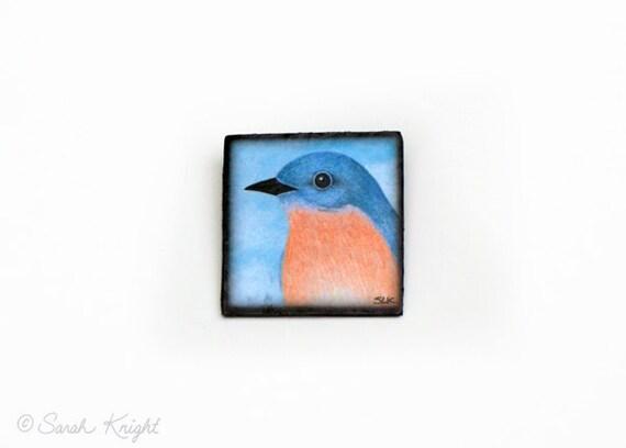 female eastern bluebird - bird art brooch by Sarah Knight, sky blue orange portrait
