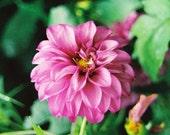 Purple Flower 5x7
