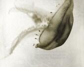 Jellyfish I - Print