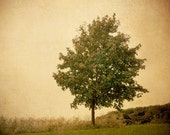 landscape photo tree brown green- Autumn Breeze fine art photograph 8x8