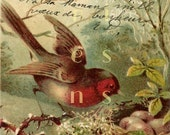 DIGITAL Scan RED Bird, Nest with Eggs French script Antique postcard