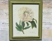 REDOUTE Botanical Print White Large Peony 11x14 Hand-Painted Dark Grassy Distressed Green Frame FREE SHIPPING
