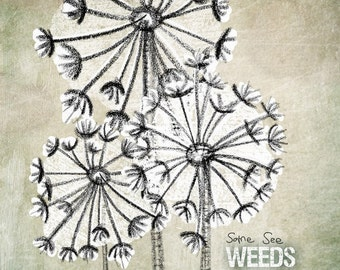 Some see wishes- Beautifully textured cotton canvas art print. Order as an 8x10 11x14 or 16x20 size.