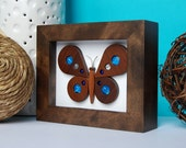 June the lovely framed butterfly