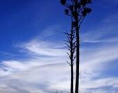 Note Card - Yucca Sunrise