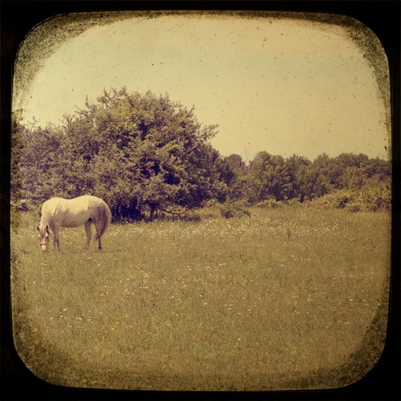 Landscape photograph - White Horse in a Summer Field - TtV photo print - country nursery wall art office home decor