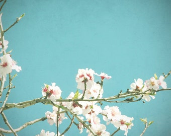 Nature photography, blossom photo, turquoise, white blossoms, blue sky,  flower photography, floral decor, spring wall art - Sweet Blue