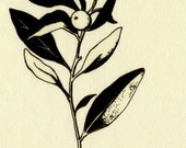 Land (plant)