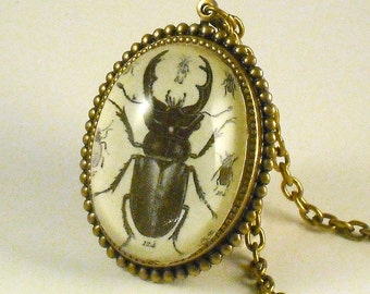 Beetle Juice- vintage inspired horned beetle Victorian brass cameo pendant necklace