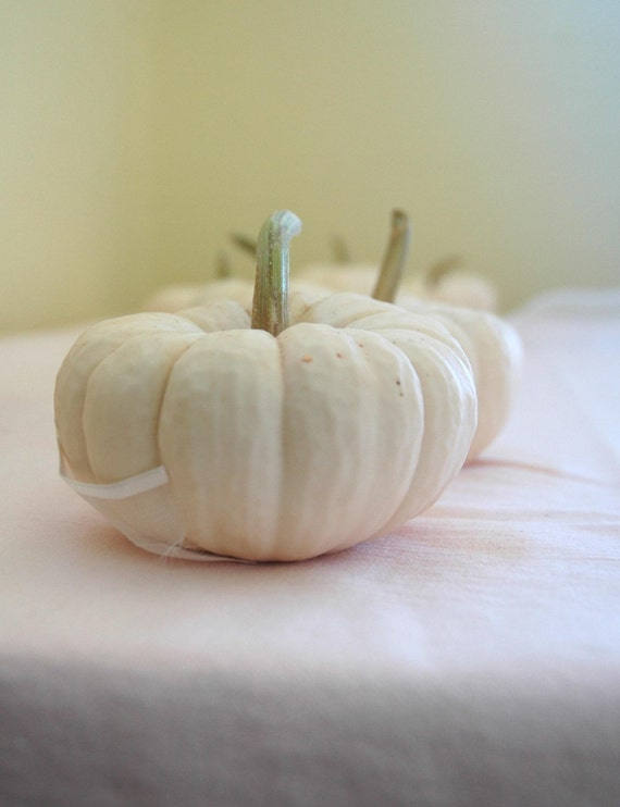 50 White Mini Pumpkins for Table Decor or Fall Weddings