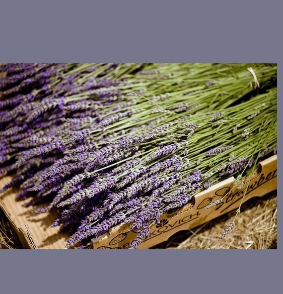 Custom Listing for Shonnette 8 bunches of French Lavender