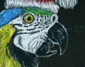 ACEO ATC Blue and Gold Macaw Santa Macaw Parrot Original Wildlife Bird Art OOAK by Nina Bolen