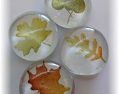 glass marble magnets -fall leaves - set of 4
