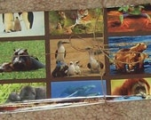 SALE.... HALF OFF ...... Calendars... become Envelopes... Animals set of 7
