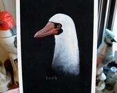 masked booby (boob)