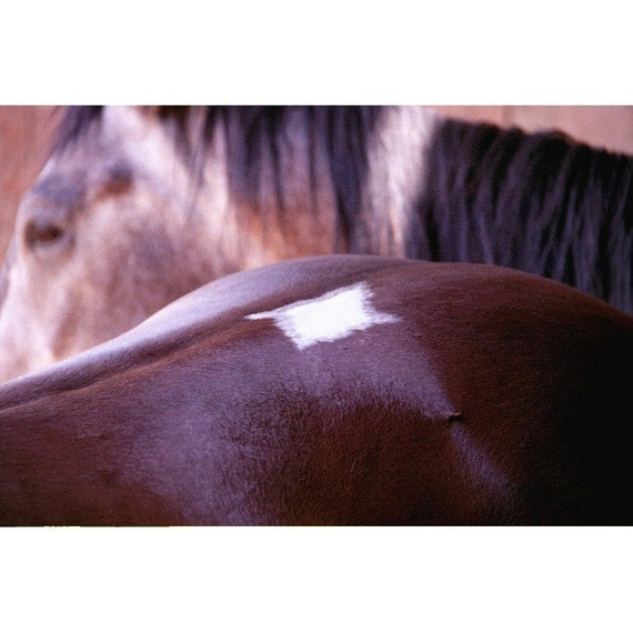 Horse Photo - Diamond - Fine Art Photograph - Animal Photo - Nature Print - Horse Marking Photo - Bay Horse Photo - Horse Wall Decor Art