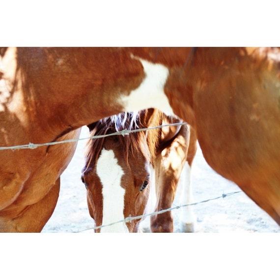 Horse Photo - Through the Wire - Fine Art Photograph - Animal Photo - Nature Print - Farm Animal Art - Brown Horse White Blaze Photo