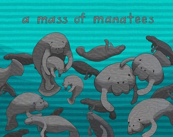 a mass of manatees - limited edition print 6/100