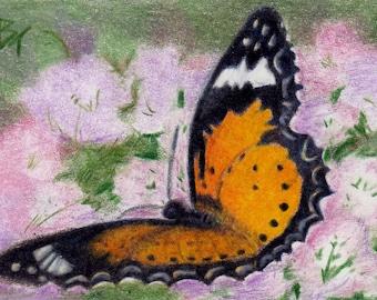 Butterfly Flutter aceo Original