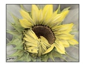 Hand Colored Sunflower Note Card