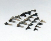 Fossil Sharks Teeth 20 Geek Science Crafts Natural History