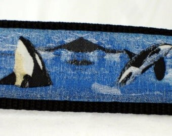 custom collar, orcas large dog collar, 1.5 inches wide, adjustable, ready to ship