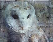Barn Owl post card