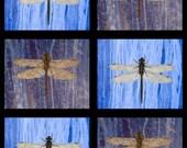 Dragonfly art postcard for sending or framing...