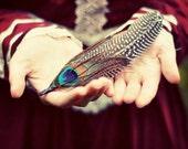 Feather Photograph, Woodland Portrait, Hands, Nature Portrait, Burgundy Color, Peacock Feather, Whimsical Photography, Burgundy Color