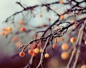 Nature Photography, Bare Branches, Winter Photograph, Orange Berries, Fine Art Photo, Winter Decor, Tree Photo, Dreamy, Elegant Home Decor