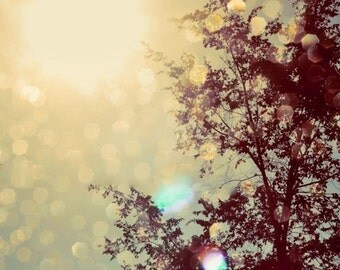 Nature Photograph, Golden Lights, Tree Photo, Warm Colors, Autumn Photograph, Fall Sky, Holiday Home Decor, Sunlight