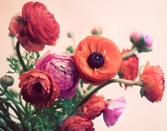 Ranunculus Photograph, 11x14 Print, Flower Photography, Romantic Photo