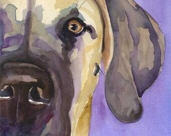 Great Dane Art Print of Original Watercolor Painting - 11x14 Dog Art