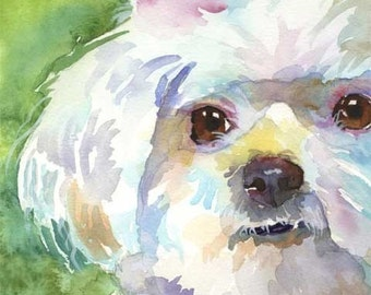 Maltese Art Print of Original Watercolor Painting 11x14
