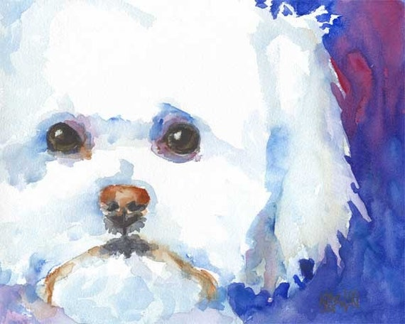 Bichon Frise Art Print of Original Watercolor Painting - 8x10